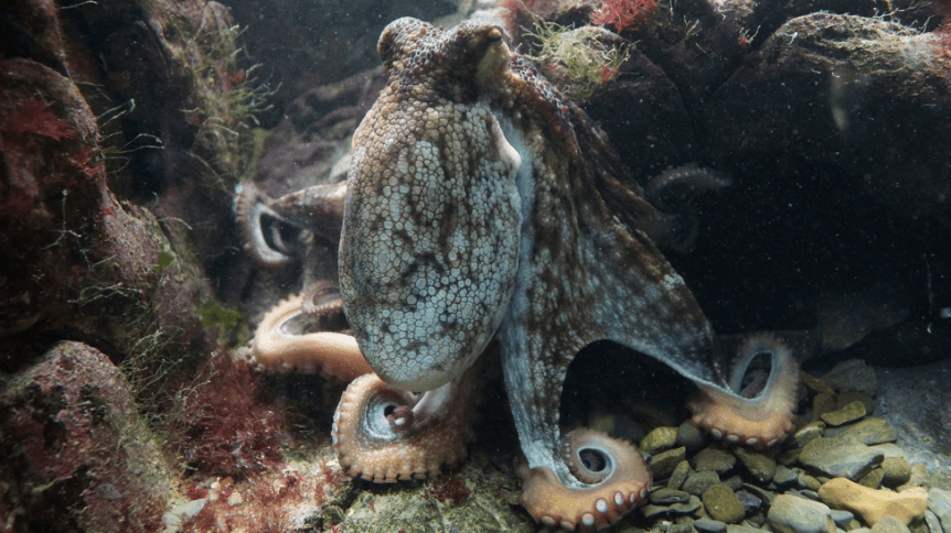 Did You Know The Octopus Decorates Its Home Storagearea Blog